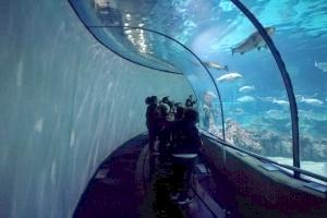 Visita al aquàrium
