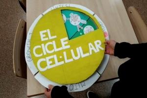 Aprendemos el ciclo celular
